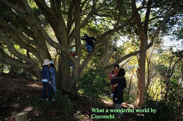 シイタケ取りでは大人も子供も興奮しています。 山川草木国土鳥悉有仏性