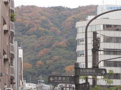 山の色づき_b0051598_21561153.jpg