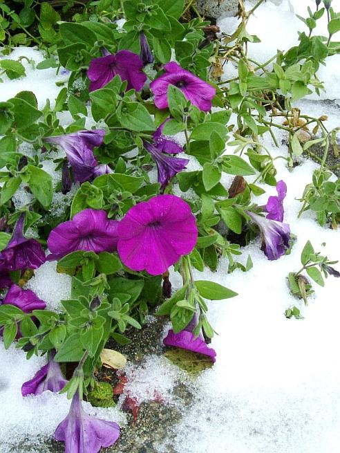 雪の日の朝_f0007106_1481580.jpg