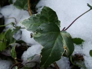 雪の日の朝_f0007106_15383583.jpg