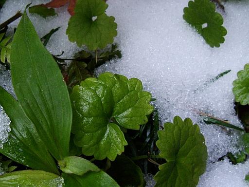 雪の日の朝_f0007106_15384779.jpg