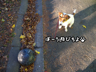f0129214_1527134.jpg