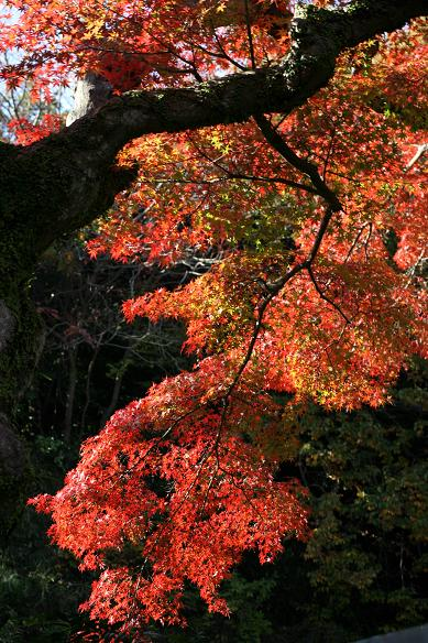 北鎌倉・円覚寺_d0150720_2242665.jpg