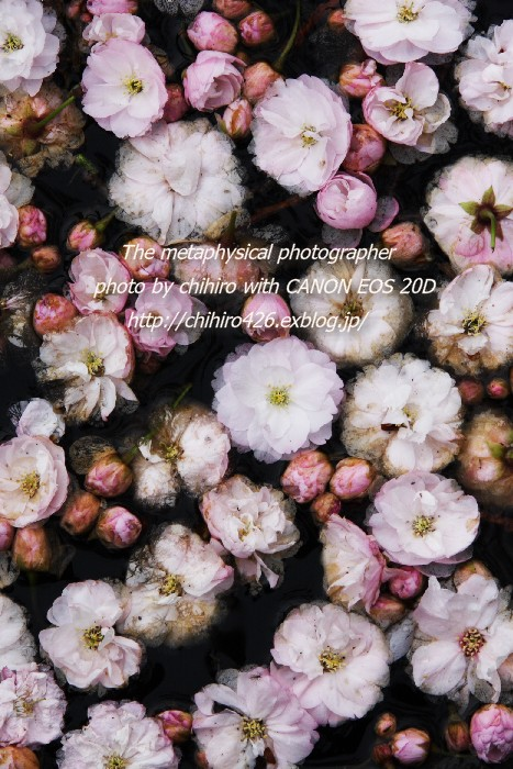 c0135535_20392438.jpg