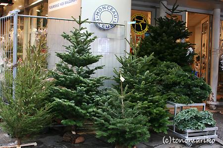 パリ、もみの木だらけ_c0024345_23172343.jpg