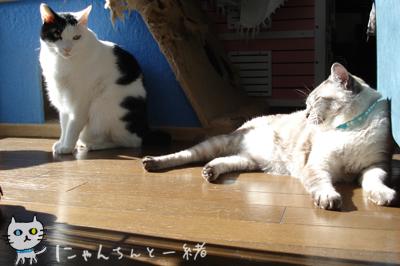 暖かい日曜は…_e0031853_18234129.jpg