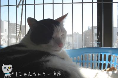 暖かい日曜は…_e0031853_18252318.jpg