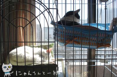 暖かい日曜は…_e0031853_1825397.jpg