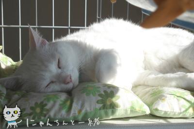 暖かい日曜は…_e0031853_18254972.jpg
