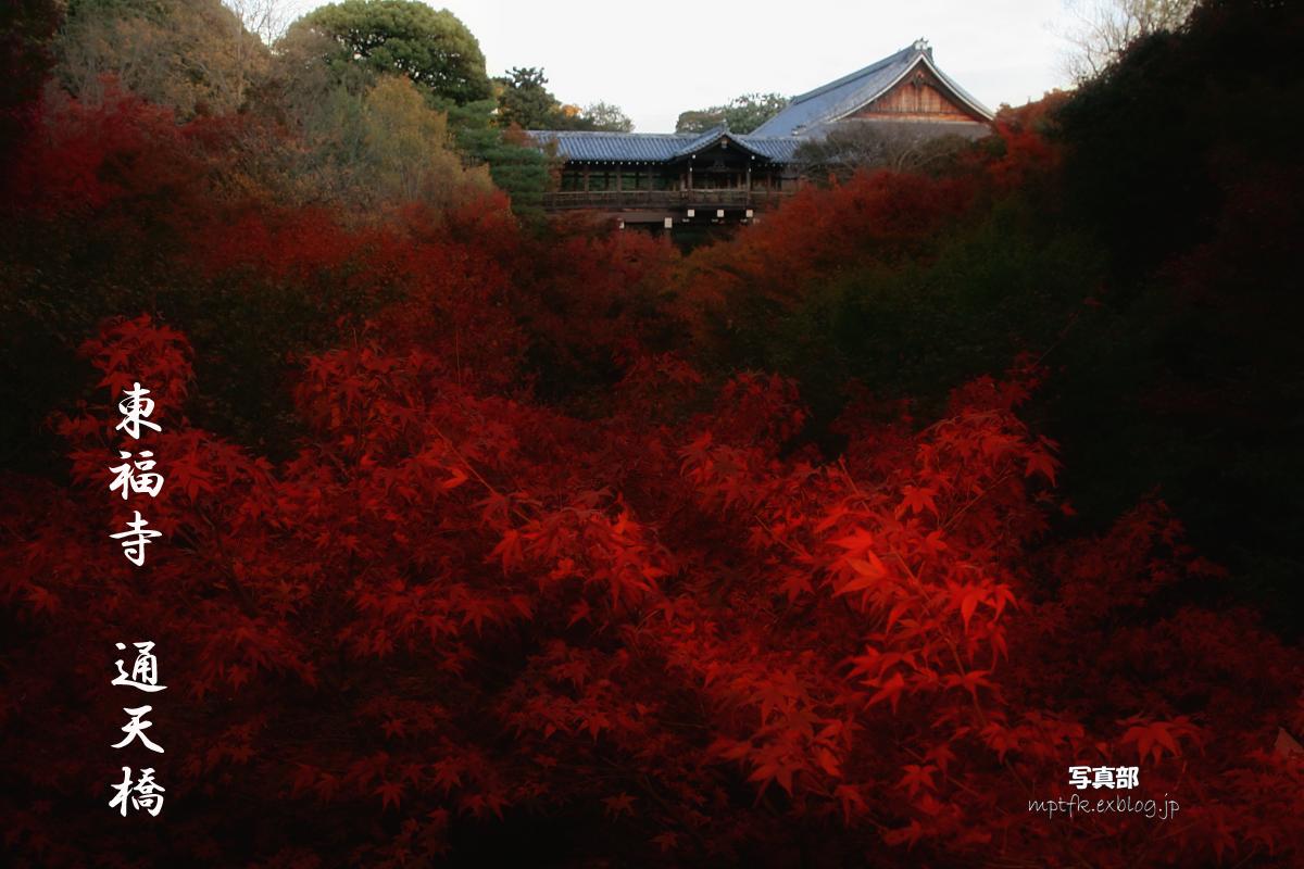 京都 東福寺_f0021869_23355175.jpg