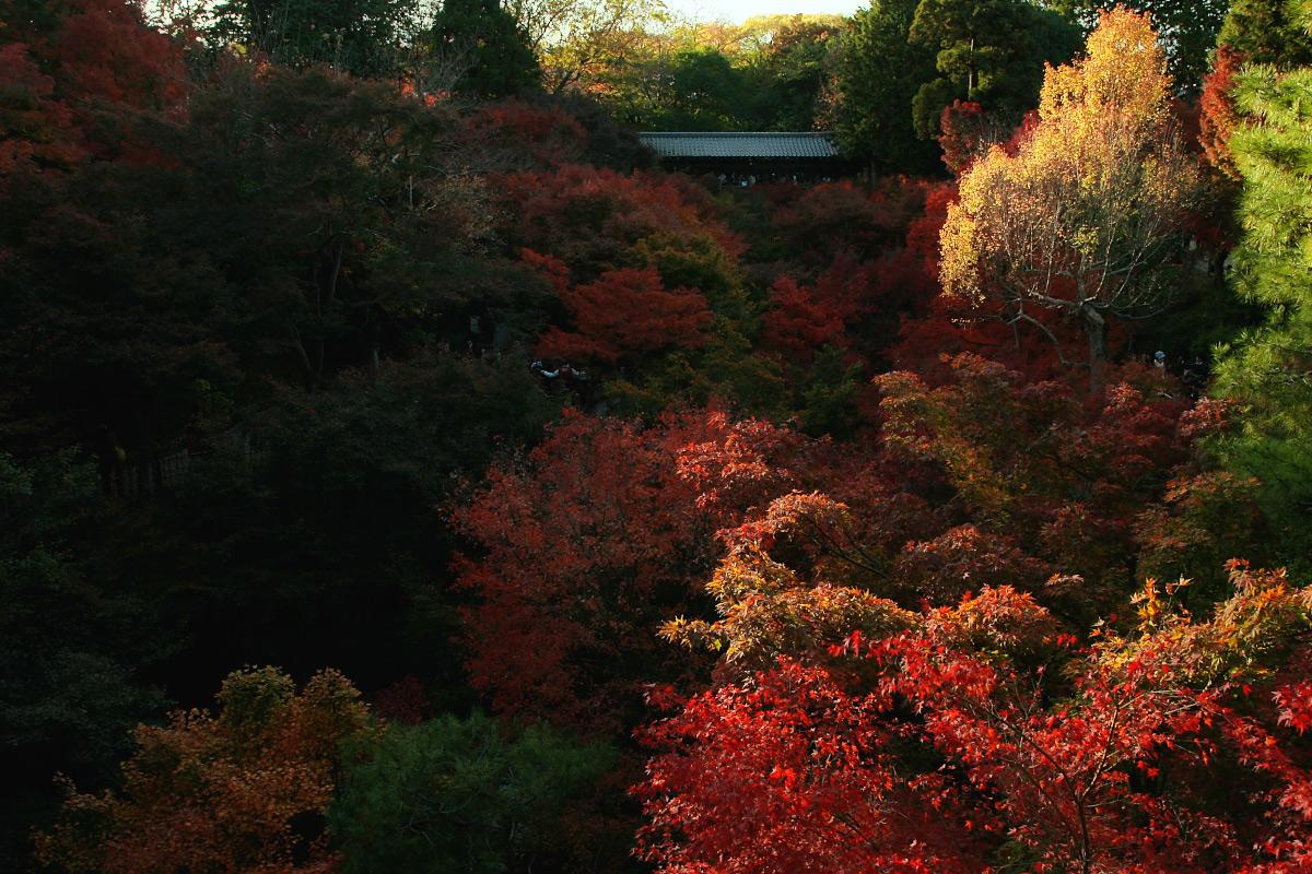 京都 東福寺_f0021869_2336478.jpg
