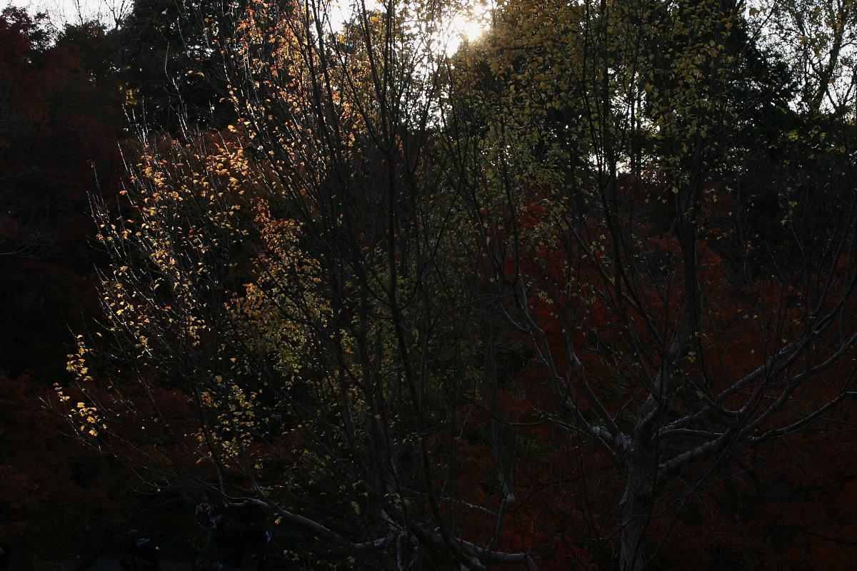京都 東福寺_f0021869_23372885.jpg
