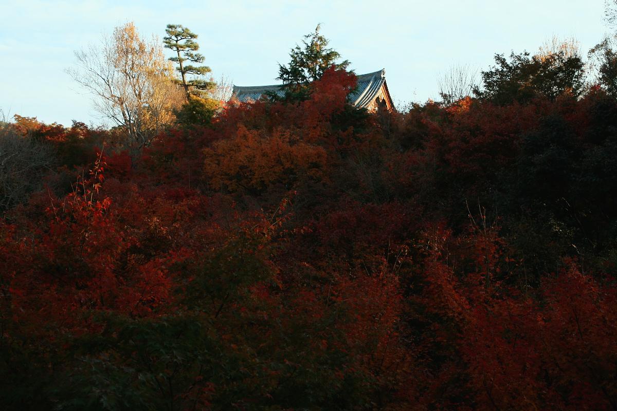 京都 東福寺_f0021869_23374975.jpg