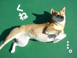 伊佐蔵のお泊まり_b0057675_1664121.jpg