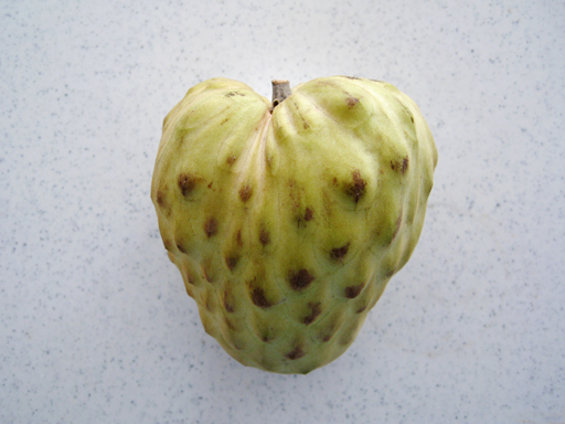 和歌山産チェリモヤ(エルバンポ)、Cherimoya 'El Bumpo' produced in Wakayama, Japan