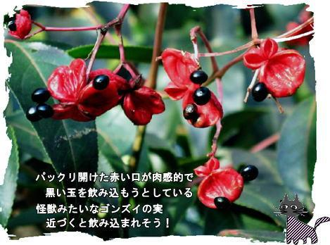 f0137096_2311757.jpg