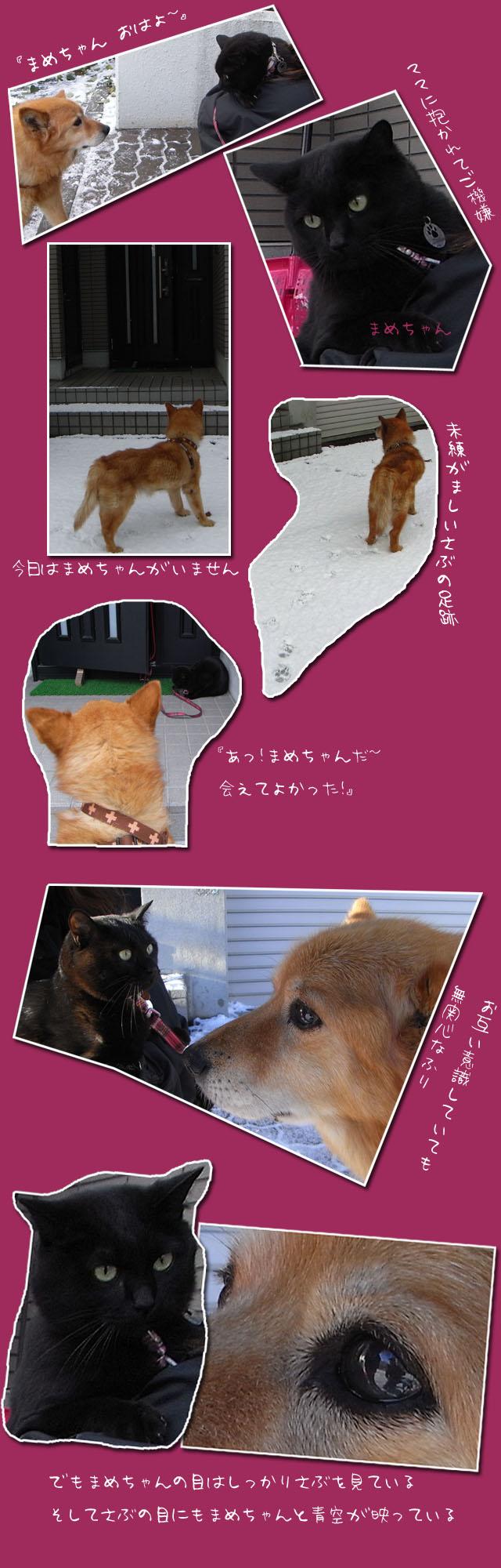 まめちゃんとサブの物語3_b0019313_18948100.jpg