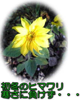 d0070316_101294.jpg