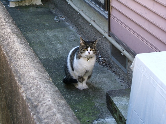 飼い猫_e0089232_22221770.jpg