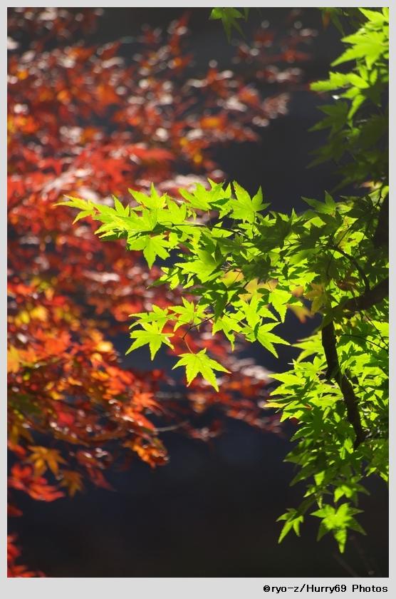 緑葉輝く紅葉の時_e0063851_1820105.jpg