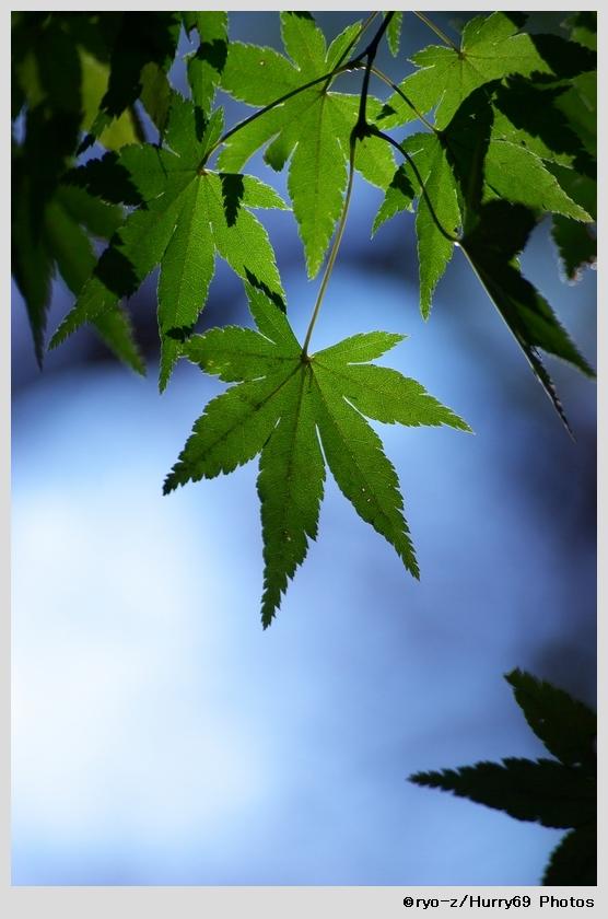 緑葉輝く紅葉の時_e0063851_18211521.jpg
