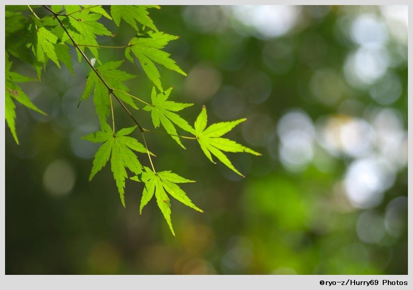 緑葉輝く紅葉の時_e0063851_18212832.jpg