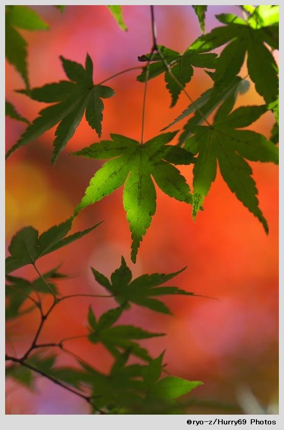 緑葉輝く紅葉の時_e0063851_187332.jpg