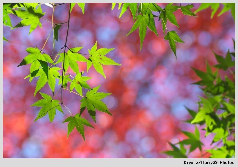 緑葉輝く紅葉の時_e0063851_1874958.jpg