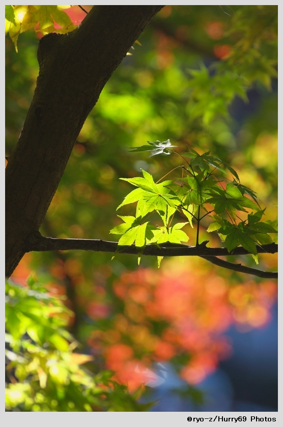 緑葉輝く紅葉の時_e0063851_1893377.jpg