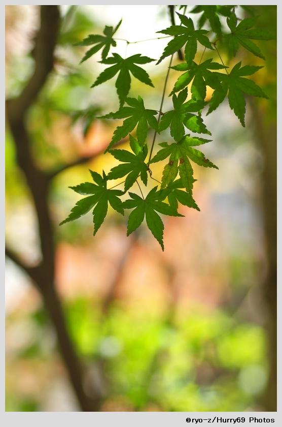 緑葉輝く紅葉の時_e0063851_1894996.jpg
