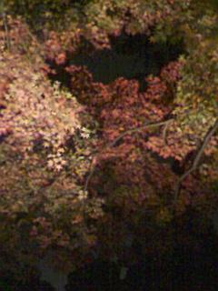 六義園の紅葉ライトアップ_e0013178_18573240.jpg