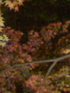 六義園の紅葉ライトアップ_e0013178_18573245.jpg