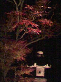 六義園の紅葉ライトアップ_e0013178_18573297.jpg