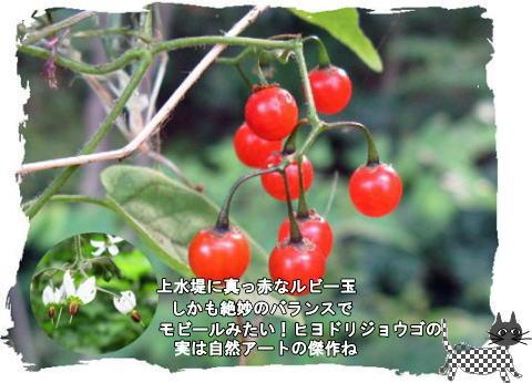f0137096_1113559.jpg