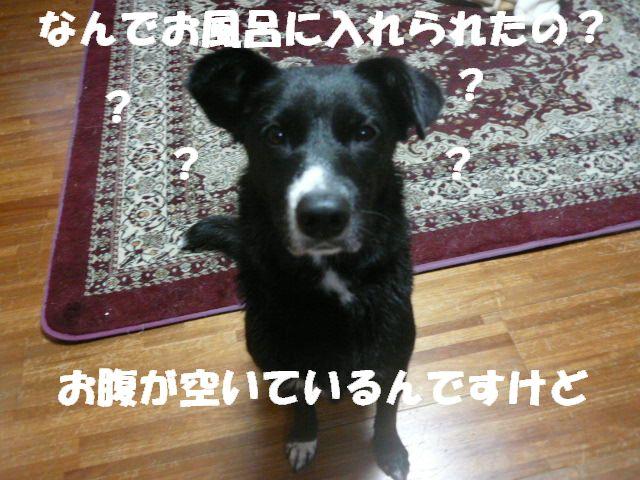a0101700_0174334.jpg