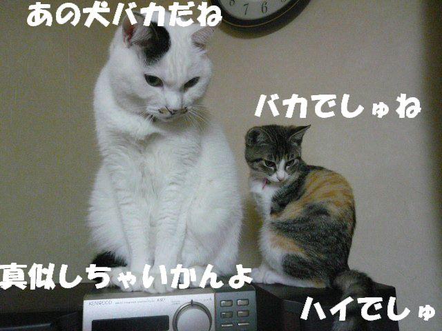 a0101700_0295555.jpg