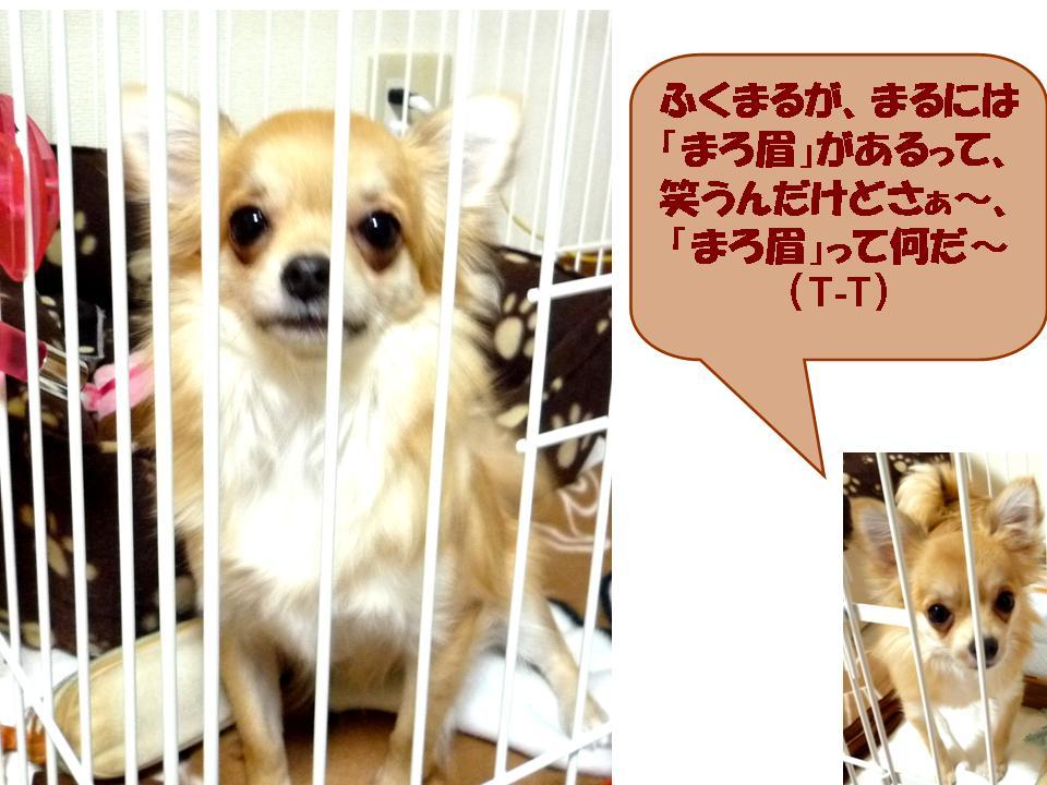 b0129300_17241288.jpg