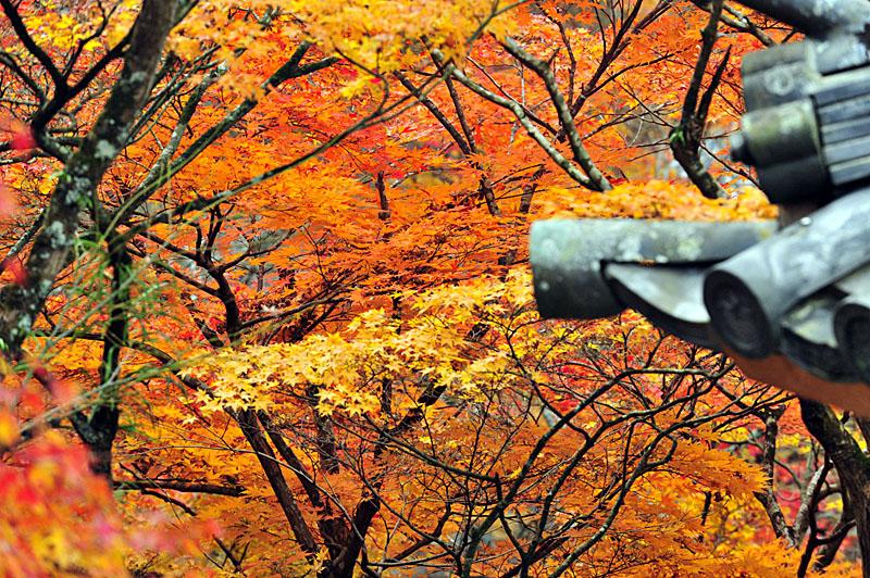 太宰府の紅葉 2008_a0042310_203184.jpg