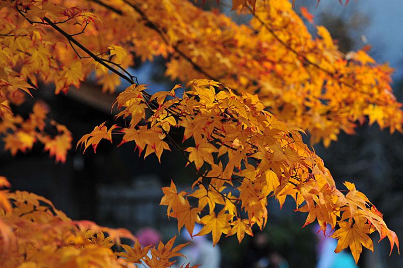 太宰府の紅葉 2008_a0042310_2061249.jpg
