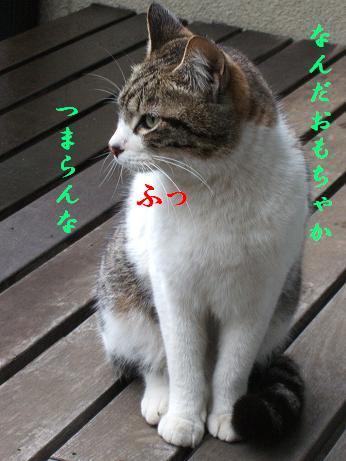 f0100012_10141654.jpg