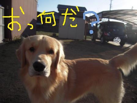 f0176830_15311864.jpg