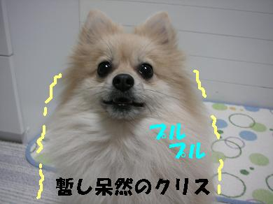 c0179136_1355776.jpg