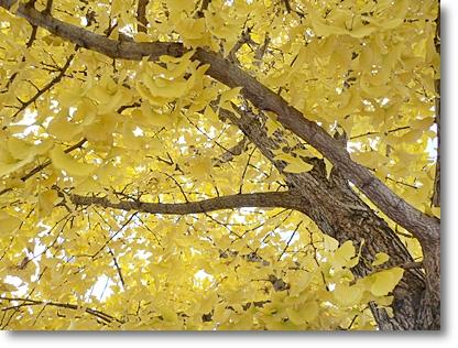 黄色の季節_c0069048_019825.jpg