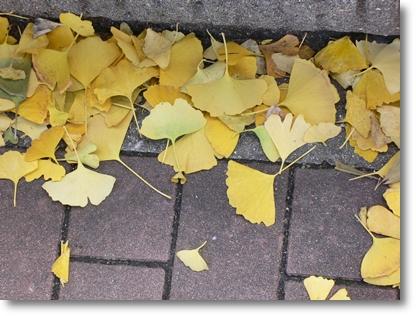 黄色の季節_c0069048_0201850.jpg