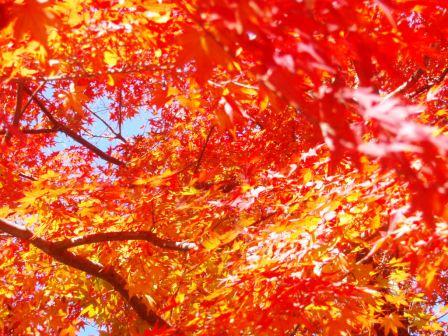そして、鎌倉(写真集バージョン)_c0119259_0395185.jpg