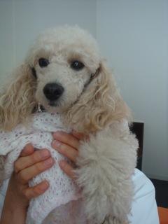 2008.12.3 妊婦犬♪_a0083571_15514915.jpg