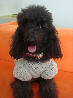 2008.12.3 妊婦犬♪_a0083571_15532015.jpg