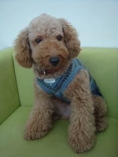 2008.12.3 妊婦犬♪_a0083571_15592295.jpg