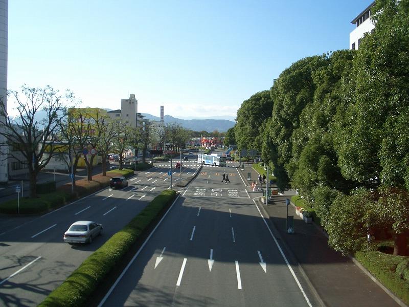 青葉通りのクスノキが_f0141310_23181261.jpg