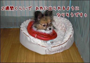 d0139352_46886.jpg